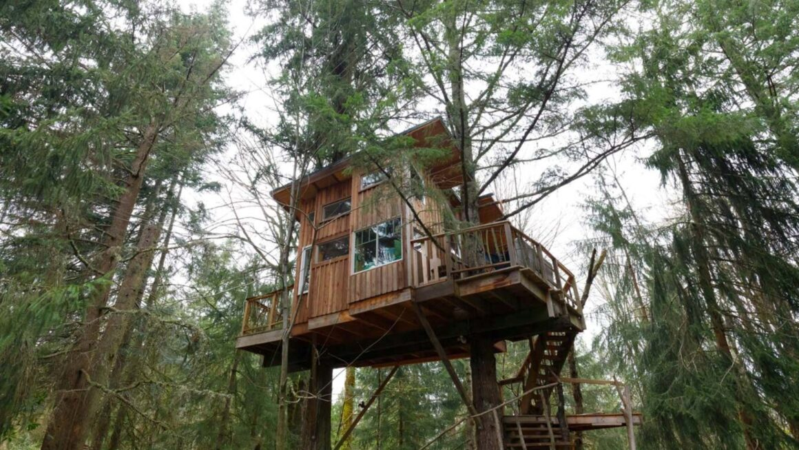 squirrels treehouse